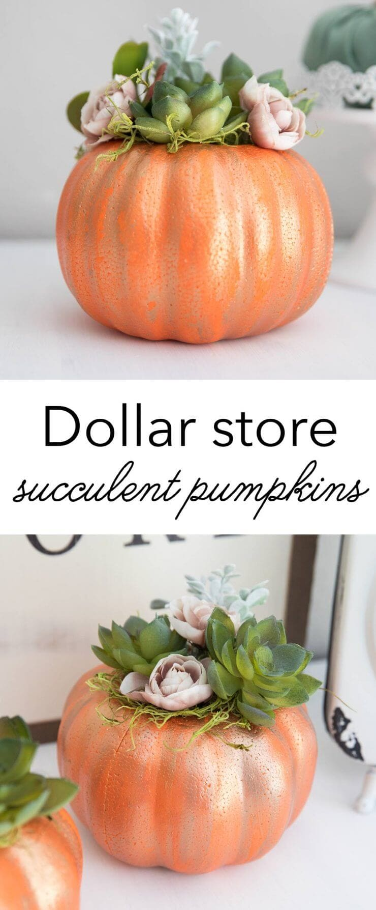 DIY Dollar Store pumpkin with succulents -a cute and simple piece of fall decor!