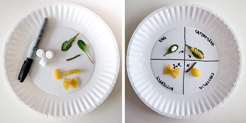 caterpillar life cycle on paper plate